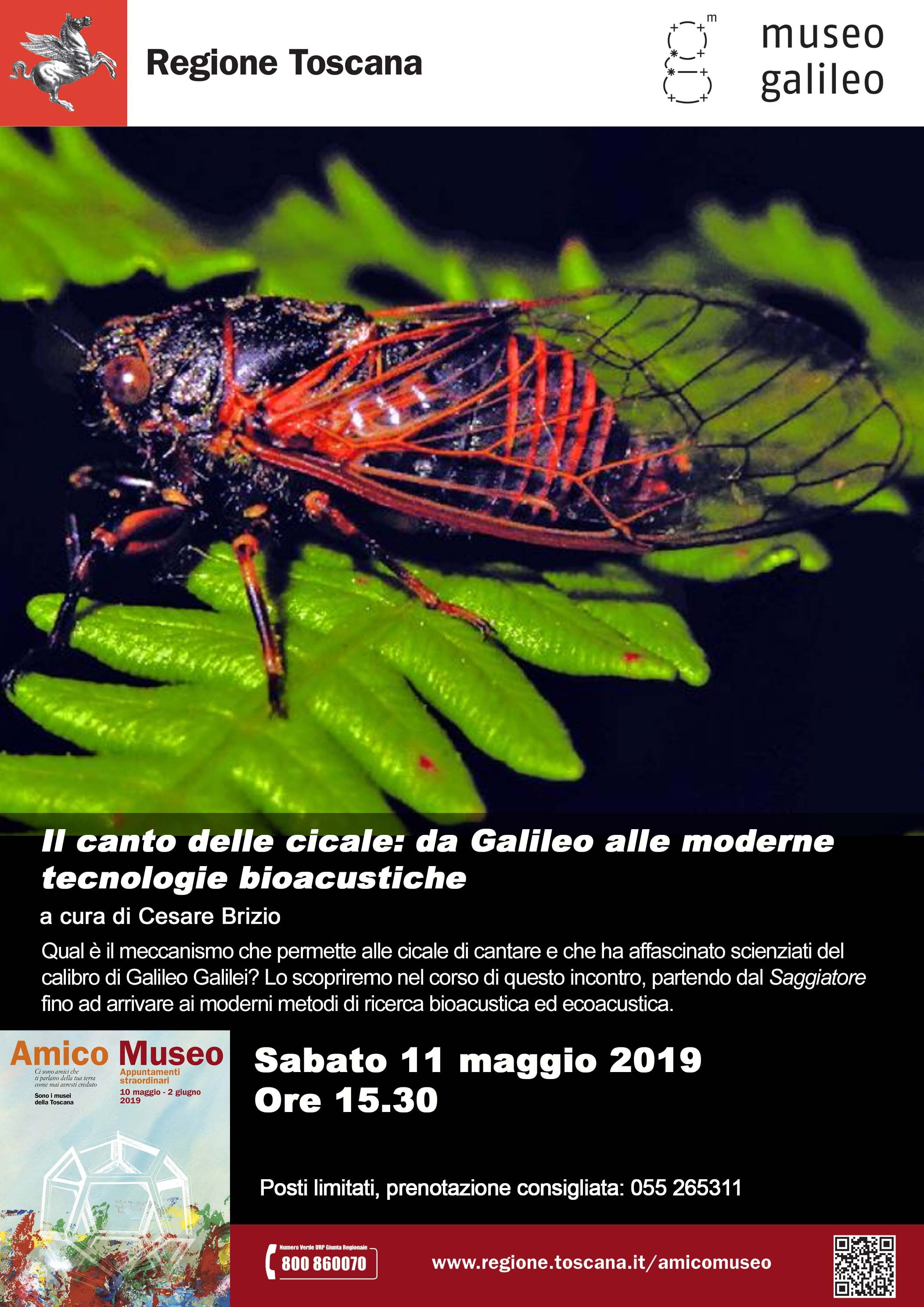 A3 Amico Museo 2019 Cicale LR